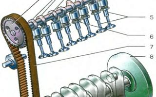 Ремень или цепь, что лучше: плючы и минусы, что выбрать